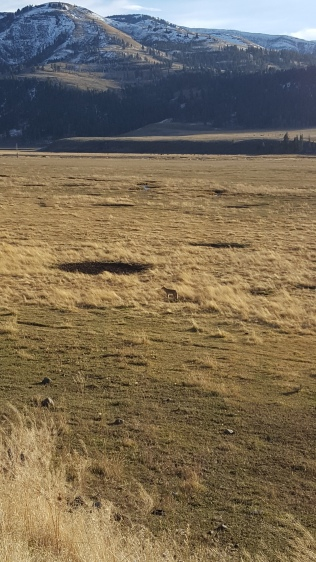 Prairie Dog Field